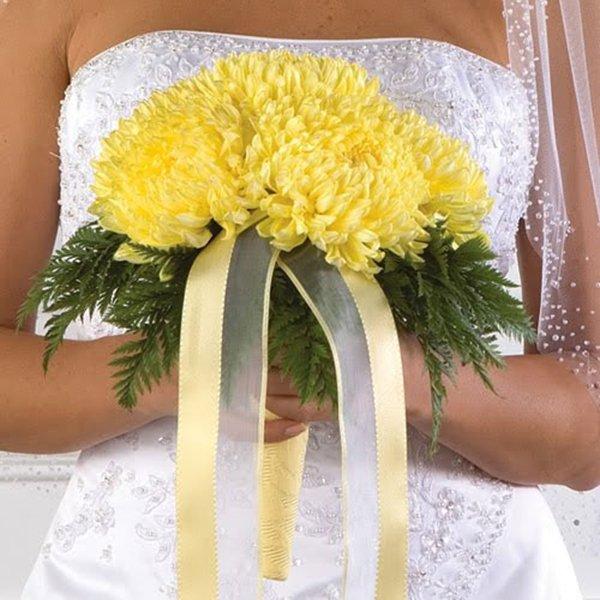 sarı kasımpatı